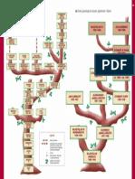 Drzewo Genealogiczne Dynastii Piastów, Jagiellonów i Wazów