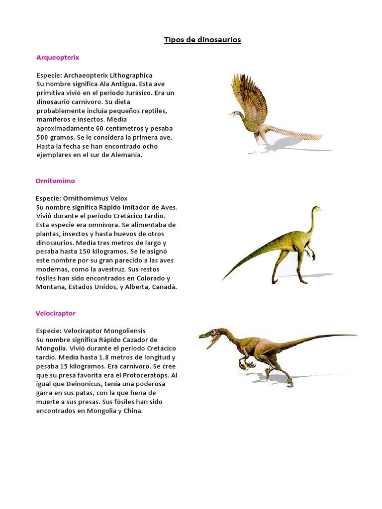Tipos De Dinosaurios 5 Basico Dinosaurios Taxa Durante el triásico, jurásico y cretáceo, existieron varios tipos distintos de dinosaurios, siendo los animales que dominaron el planeta. tipos de dinosaurios 5 basico