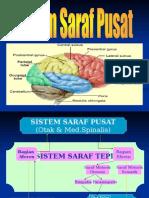 SistemSarafPusat_faal.ppt