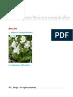 Flori Colocviu