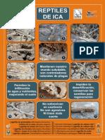 Afiche de Reptiles