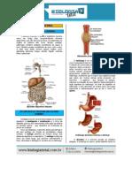 MATERIAL 20130804135742TeoriaSistemaDigestorio