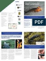 Monkton Wildlife and Amphibian Crossing Project, 2013