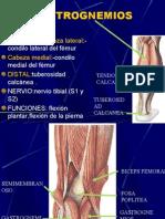 Musc.region Posterior de La Pierna y Region Plantar
