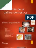 Anatomia y Fisiología de La Gallina Domestica