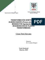 Metodos de Trasformacion