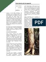 Ficha Técnica Eucalyptus saligna