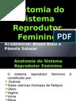Aula Anatomia Sist Rep Feminino