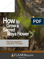 7 Pachira Aquatica Growth Sequence