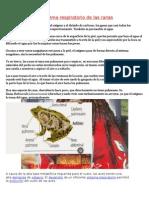 El sistema respiratorio de las ranas.docx