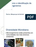 Isolamento e Identificação de Microrganismos