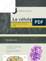 La Célula, Historia, Organelos, Procariontes y Eucariontes