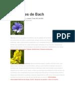 Flores de Bach y Enfermedades Que Curan
