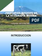CURSO BASICO DE ECOGRAFIA BOVINA.ppt