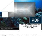 Guia Identificacion Corales del atlantico