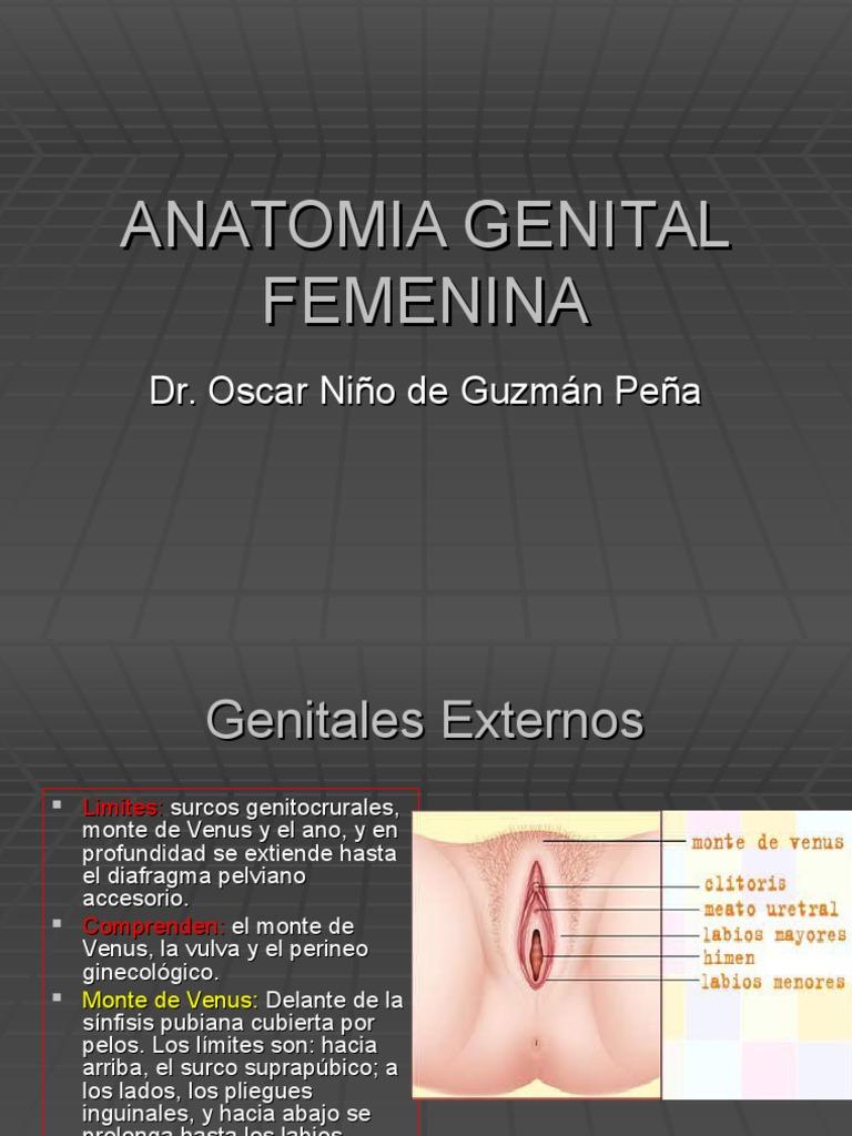 Anatomia Genital Femenina