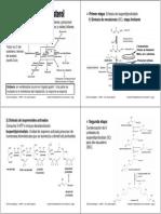 16-Unidad 6c Metabolismo Colesterol Imprimir