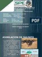 Asimilacion de Sulfato