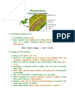 Overview Photosynthesis