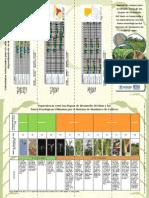 Etapas de Desarrollo y Fases Fenologicas Del Maiz