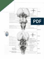 Neuroanatomy Through Clinical Cases 2e Pdf Vertigo Hearing
