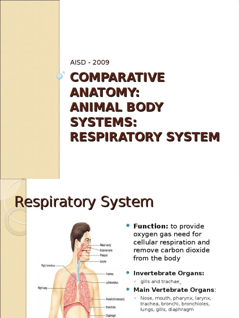 Comparative Anatomy Respiratory System Gill Respiratory System