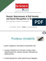 Proteus Mirabilis