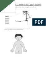 Guia de Ciencias respiratorio