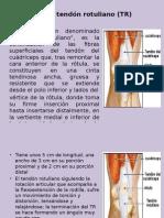 Roturas Del Tendón Rotuliano (TR)