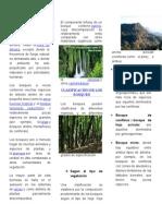 Bosque Vida de Clima Calido
