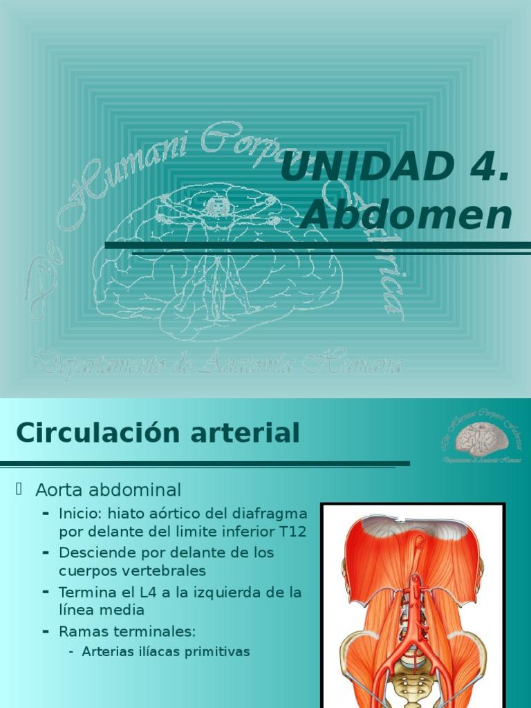 aorta abdominal y sus ramas