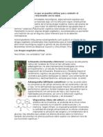 Las Drogas Vegetales Que Se Pueden Utilizar Para Combatir El Deterioro Cognitivo Relacionado Con La Edad