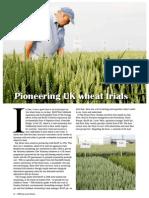 Pioneering UK wheat trials