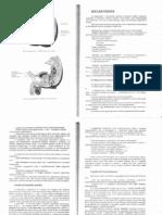 Dr. Török Béla_Funkcionális anatómia_Idegrendszer