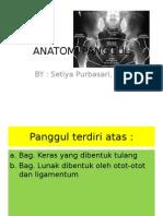 2. ANATOMI PANGGUL.ppt