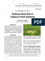 Pythium Root Rot in Tobacco Float Systems
