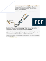 Estrutura Dos Cromossomas Das Células Eucarióticas