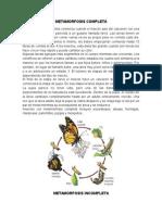 METAMORFOSIS COMPLETA.docx