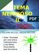 2 Sistema Nervioso Fisiología A