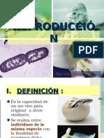 Reproduccion Ciclos Biologicos Vitales