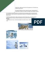 El Polo Norte También Es Denominado Ártico