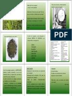 La Propuesta Política de La Agroecología