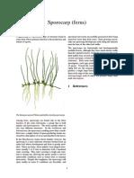 Sporocarp (Ferns)