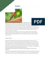 Malaria Gejala Dan Penyebab