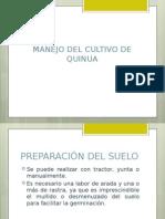 Cultivo de Quinua2