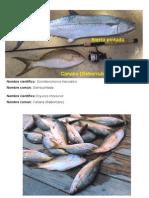 Especies de Interes Pesquero