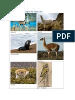 Animales en Peligro de Extinción