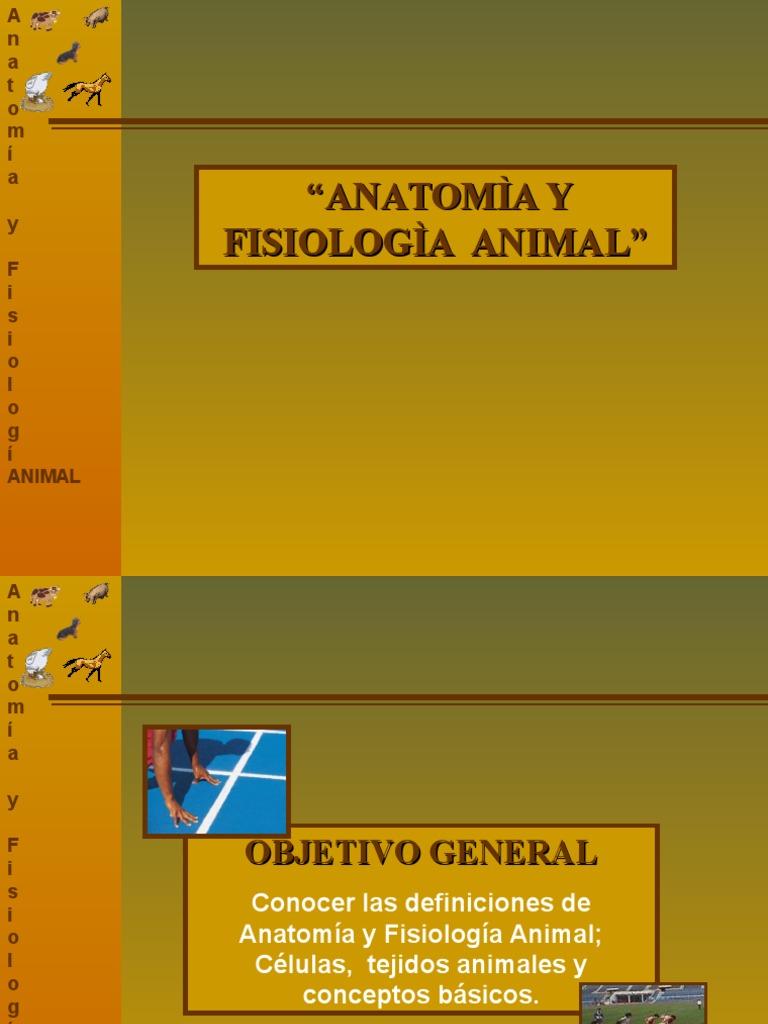 Anatomìa y Fisiologia Animal