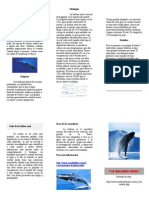 Visita de Ballenas a Ecuador-triptico.doc