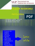 02 Lab. Patologia - Lesión Reversible